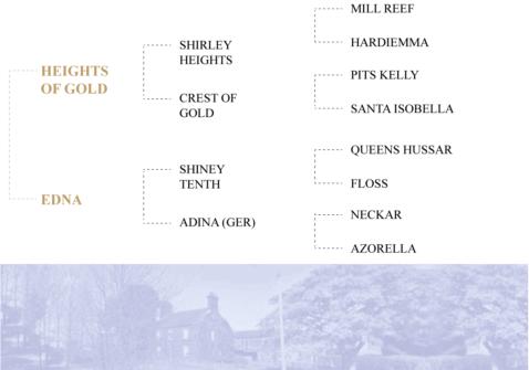 Andes-pedigree-New-Hill-Farm