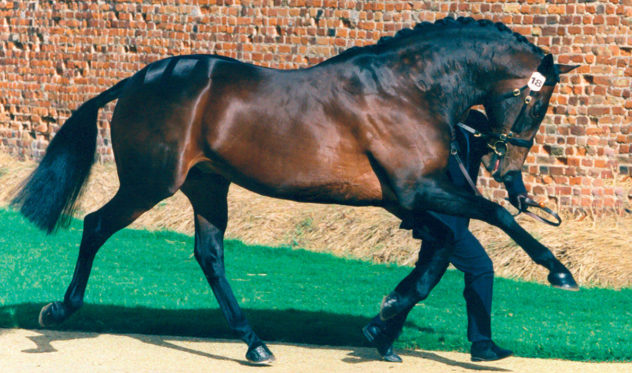 Andes-Stallion-New-Hill-Farm